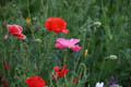 Wildflowers A689 Sedgefield