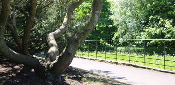 Wharton Park - Pretty