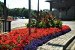 Durham in Bloom Leazes Road roundabout - July 2018