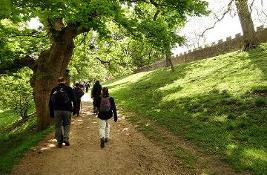 Guided walks
