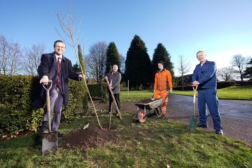 Cherry trees planted Chester le Street
