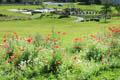 Wildflowers Bishop Auckland Town Park
