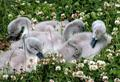 Signets credit Mark Rothery