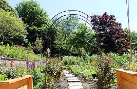 Wharton Park allotment