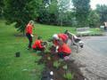 Newker Primary School - Avondale Terrace planting 2017