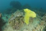 Plastic in the sea Plastic pollution