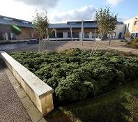 Bushes around Aycliffe Secure Centre